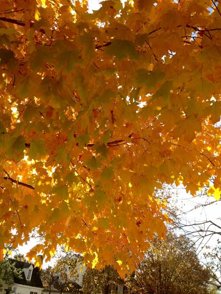 Fall Williamsburg